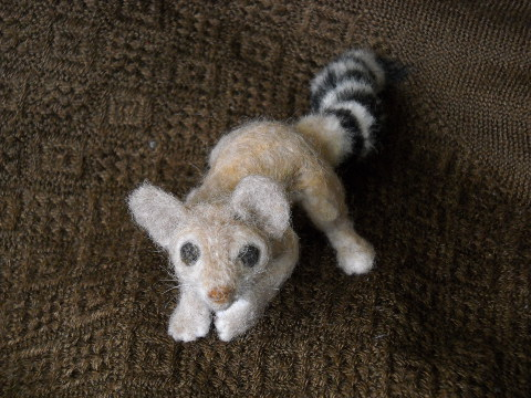 Ring-tailed Cat