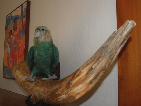 Kakapo &#147Charlie&#148 at Home