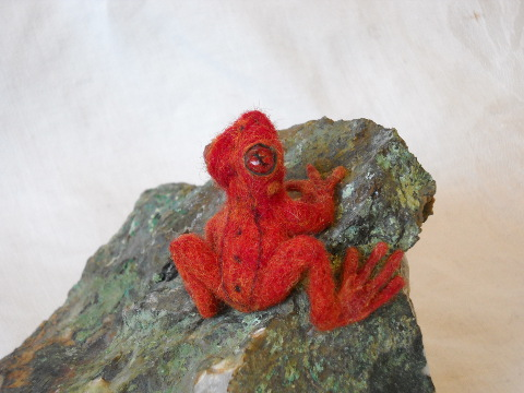 Red Frog – Update
