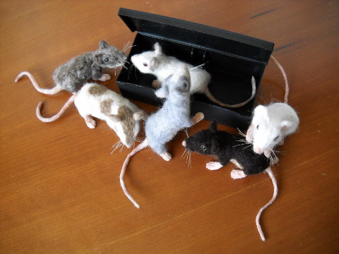 Mouse Litter 10: The Right-Sized Mice
