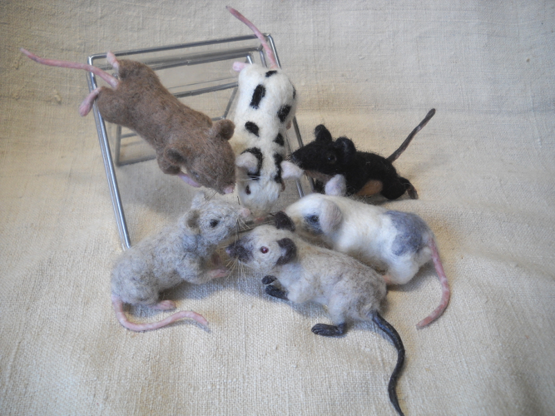 Mouse Litter 17 – The Truly Fancy Mice