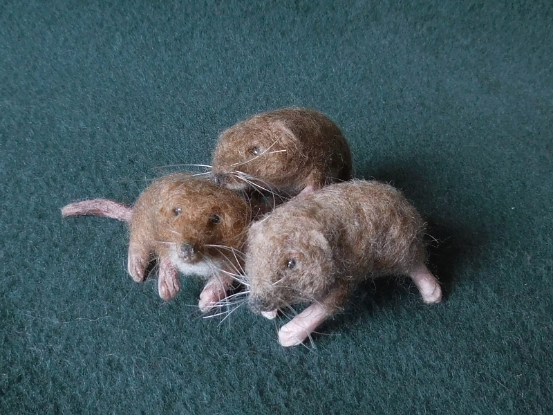 Pygmy Shrews